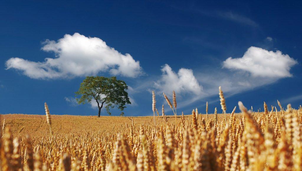 productia de cereale