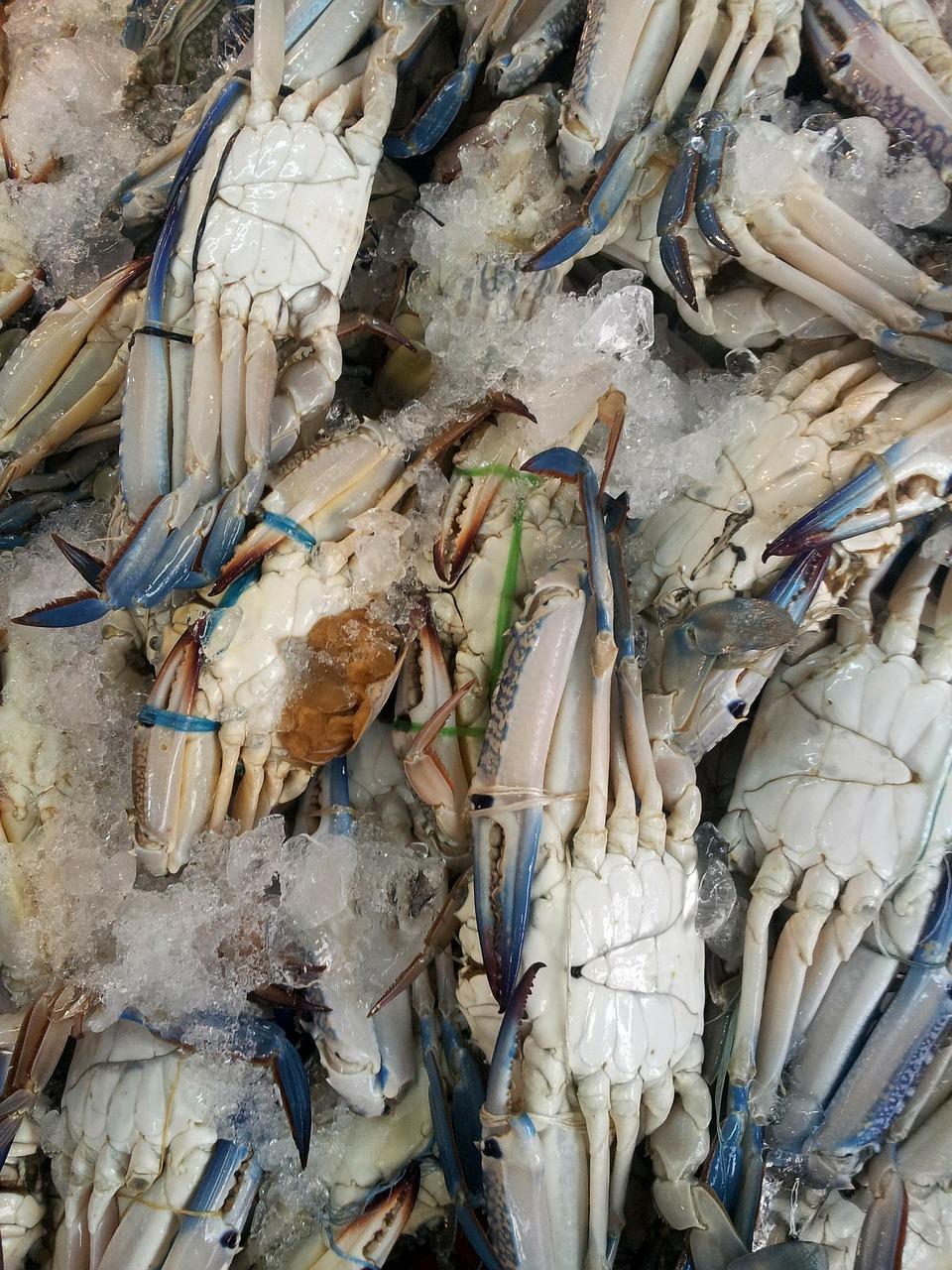 crab înghețat